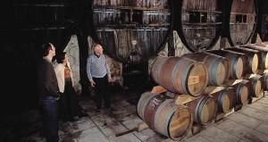 Cap d'Agde - Terroir - Le vin